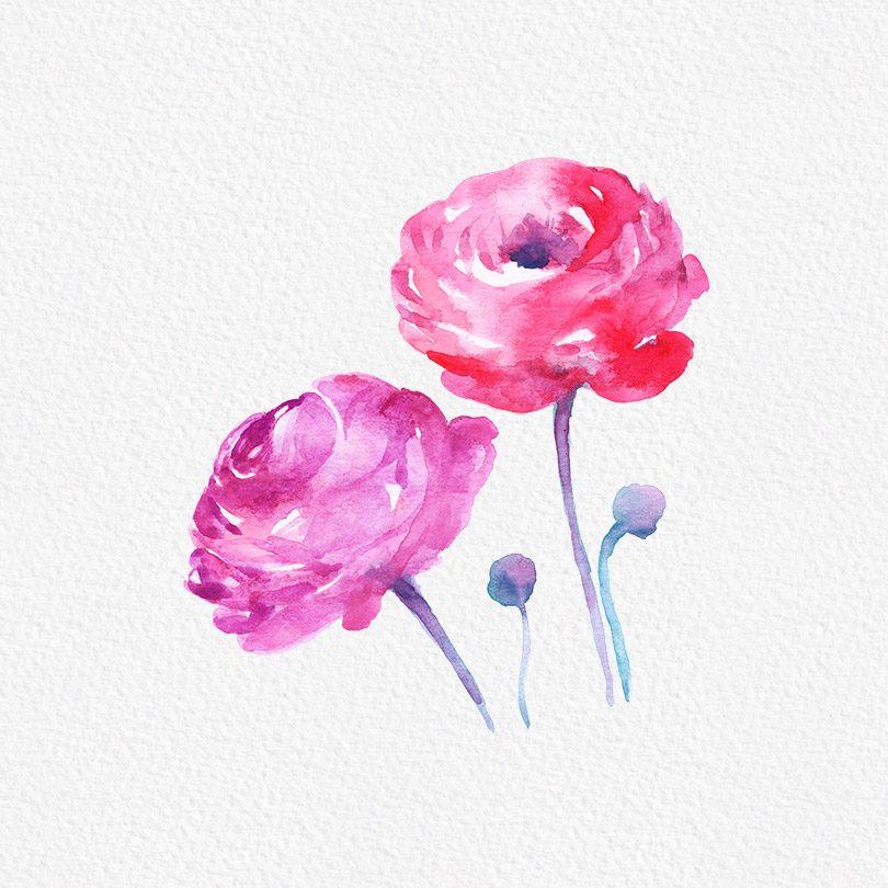 Gogivo_5438_rose
